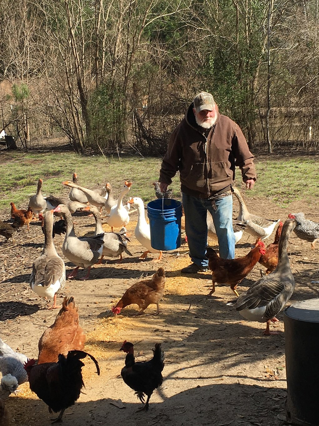 Reggie Rice Grass Feeding Chickens